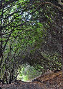 jason-autumn-in-lyme-park